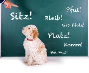 """Hund lernt """"Sitz"""""""