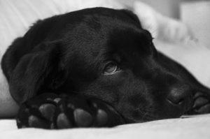 Hund liegt entspannt auf der Decke