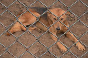 Hund sitzt traurig hinter einen Gitterzaun