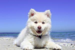 Junger Hund am Strand