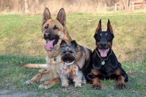 3 Hunde sitzen entspannt im Gras