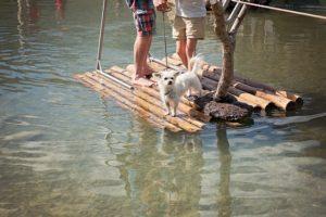 Hund auf dem Floss mit 2 Männer
