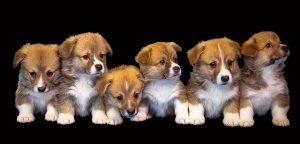 6 kleine Hundewelpen