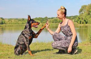 Clicktraining Hund gibt Frau die Pfote - Deine Hundehilfe
