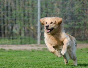 Clicktraining Hund kommt angesprungen - Deine Hundehilfe
