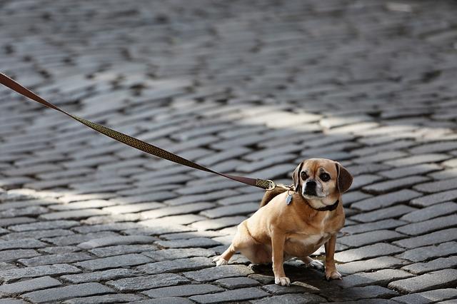 Hund locker an der leine laufen