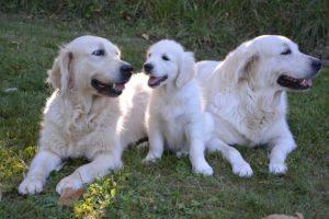 Hundeerziehung Hund Grenzen setzten