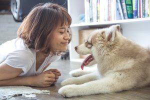 Häufige Missverständnisse in der Hundeerziehung