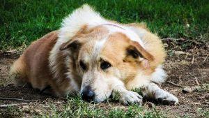 Hund stubenrein bekommen? Soforthilfe gegen unerwünschtes Urinieren
