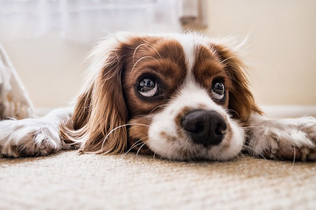 Umgang mit unsicheren Hunden