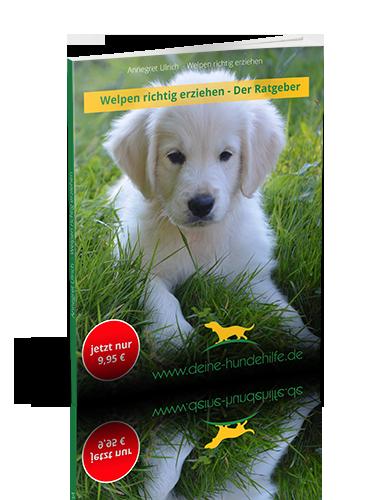 Welpen richtig erziehen - Ratgeber - Deine Hundehilfe
