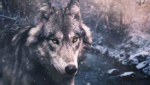 Der Mythos der Hund ist ein Rudeltier auf dem Prüfstand