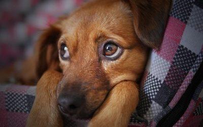 """Krankheitsbild """"Chronische Diarrhoe beim Hund"""""""