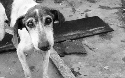 Hund niest – Ursachen und Therapien