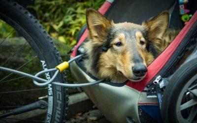 Fahrradanhänger für Hunde – welcher ist der Richtige?